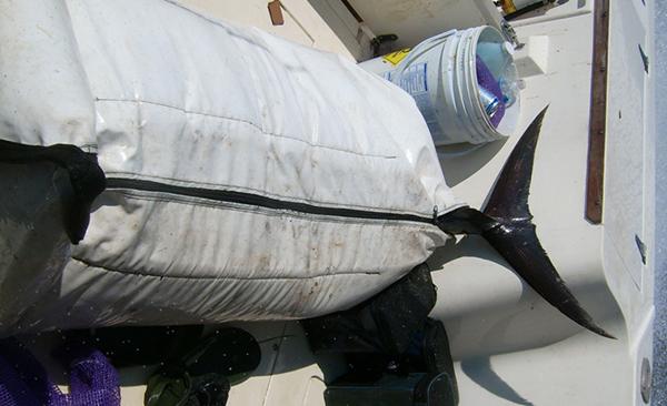 rmi-fish-bags