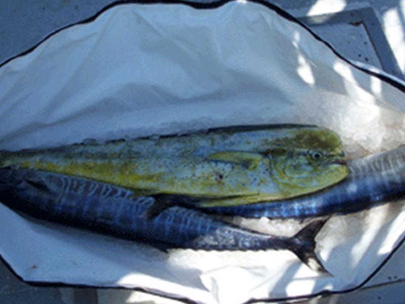 rmi-fish-bags2